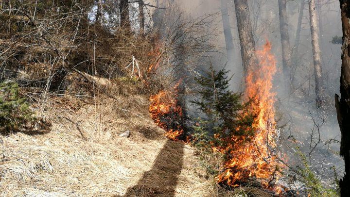 Erster Waldbrand im Bereich Telfs